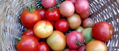 Dieta Mediterránea, ¿Qué es?